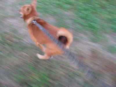 走れるんだぜ!ほんとは。