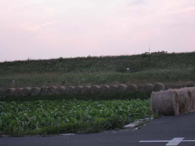 牧草ロール