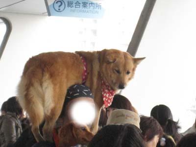 肩に乗る犬