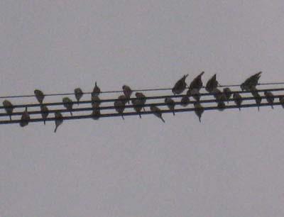 小鳥のメロディ