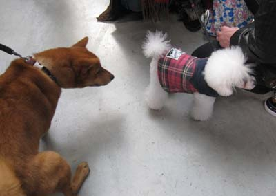 小型犬 大好き~