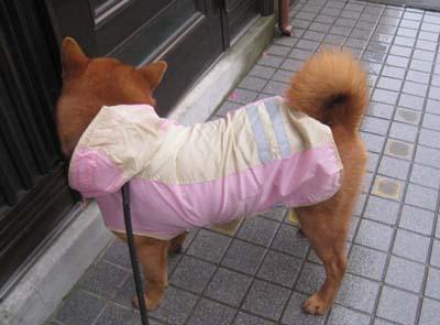 ピンクのレインコート