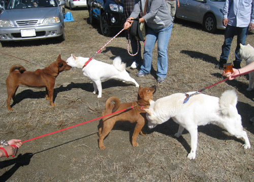 紅白犬合戦?!