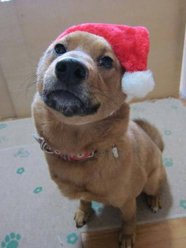メリークリスマスなの~